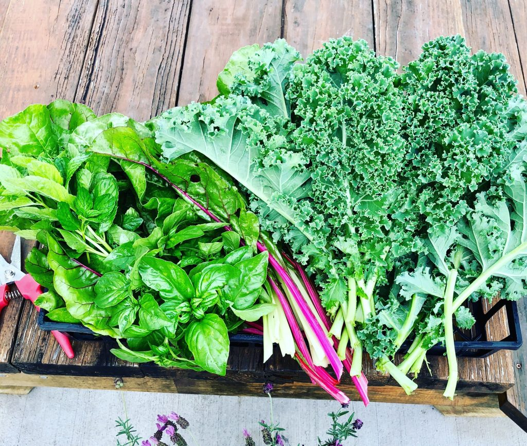 swiss chard and other herbs